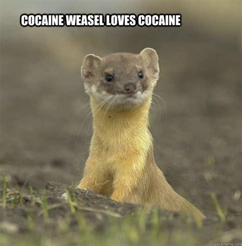 cocaine weasel memes quickmeme