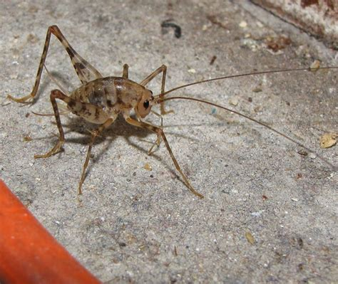 100 how to get rid of crickets in basement how to