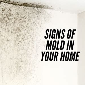 signs of mold in house mold in your house symptoms brittany murphy killed by toxic mold celebrity diagnosis mold