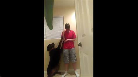 panic attacks in dogs s response to owner s panic attack will leave you in awe