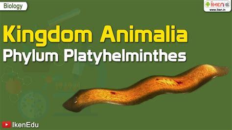 kingdom animalia phylum platyhelminthes youtube