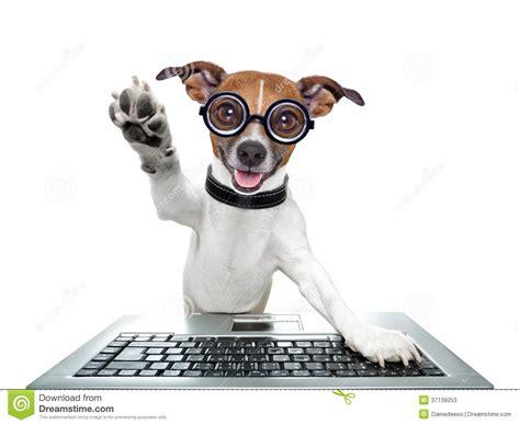 Komik Grooming Up 18 perro tonto ordenador fotos de archivo imagen 37139253