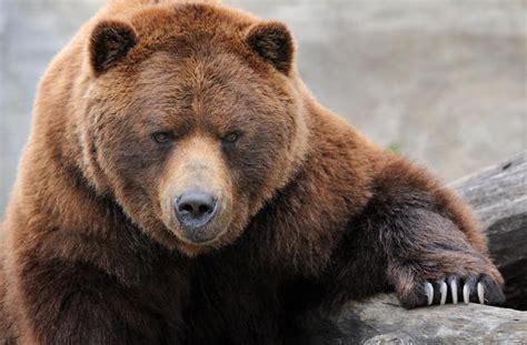 imagenes epicas de animales 5 animales que se convirtieron en verdaderos h 233 roes y