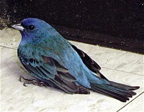 injured bird driverlayer search engine