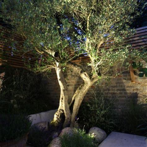 illuminazione alberi come illuminare il giardino come fare punto luce