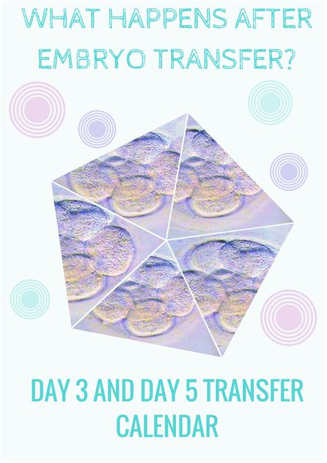 Ivf Pregnancy Calendar What Happens After Embryo Transfer Day 3 Day 5 Transfer
