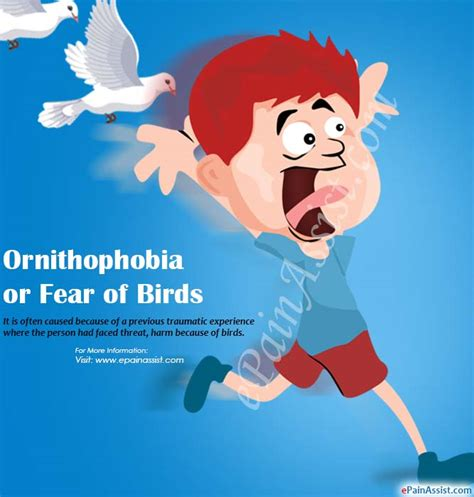 ornithophobia  fear  birdscausessymptomstreatment