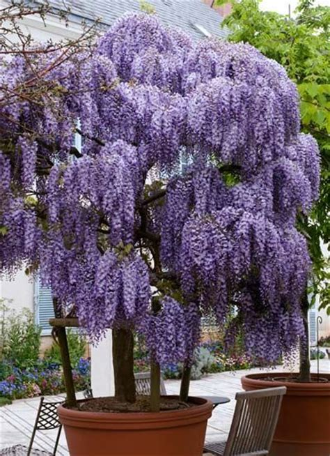 505 best images about Ornamental trees & shrubs on
