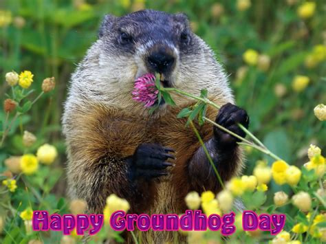 groundhog day free free happy groundhog day 2011 computer desktop wallpaper