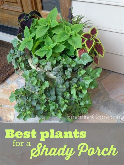 Patio Shade Plants by 25 Best Ideas About Front Porch Plants On