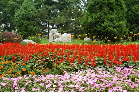 flower trees and rocks free stock photo public domain pictures