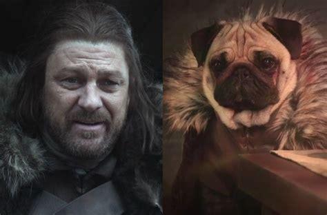 pug look alike of thrones characters and their pug look alikes beyond the zimbio