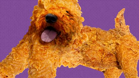 puppies that look like fried chicken puppies that look like fried chicken 95430 homeup