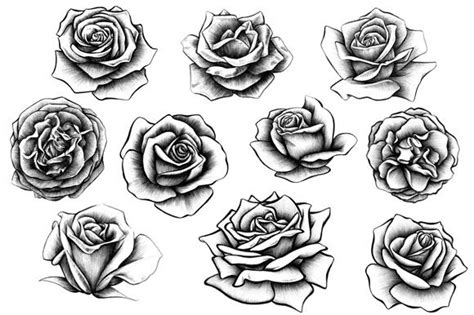 10 rose illustrations rose illustration rose and