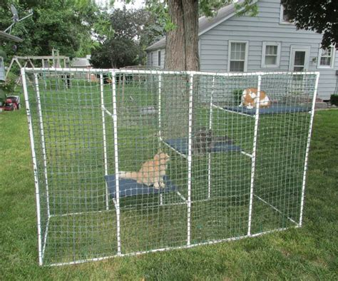 Alas Kandang Sulcata best 25 outdoor cat cage ideas on cat cages