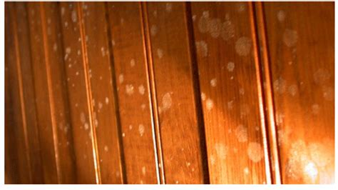 Remove Mildew From Carpet by Mold On Paneling Mold Remediation Information