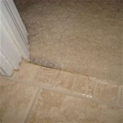 carpet  tile transition  bar