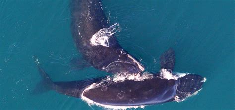 speed zone boat right whales sighted east of boston speed zone