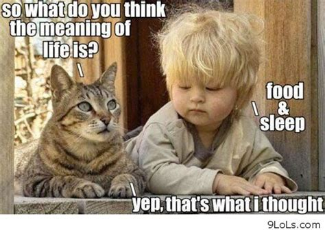 Good Meme Captions - funny memes funny pictures funny animals quotes funny
