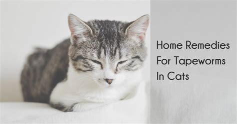 tapeworm treatment home remedy home remedies for tapeworm in cats