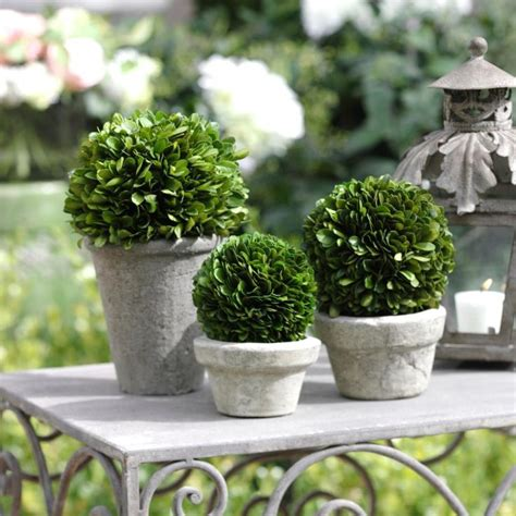 how to make a boxwood topiary boxwood potted topiary