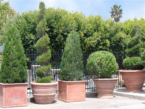 Outdoor Topiary Planters by Topiaries Terra Cotta And You Eye Of The Day Garden