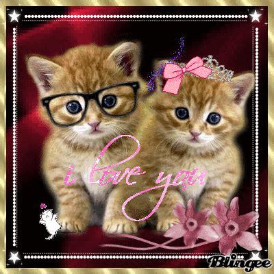 imagenes de amor de gatitos animados gatitos enamorados picture 113072597 blingee com