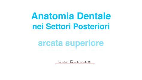 tavole anatomia tavole anatomia laboratorio odontotecnico leonardo