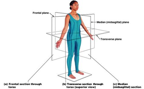 section body orientation of the body cullen s blog
