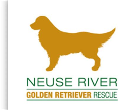 golden retriever rescue southeast h e a l the pet pantry raleigh nc