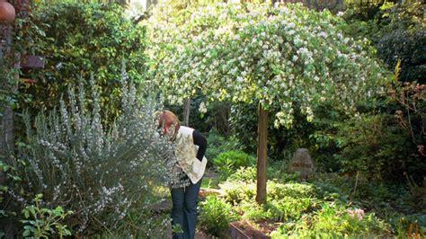 Boom Kleine Tuin by Vroege Vogels Natuur En Milieu In Nederland