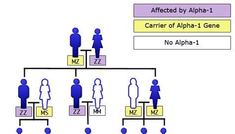 alpha 1 antitrypsin im stuhl alpha1 facts alpha 1 consulting