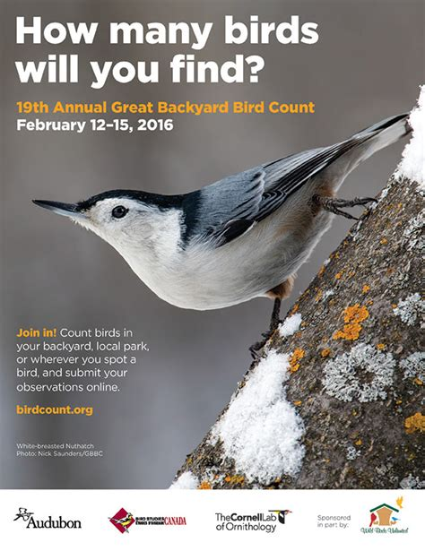backyard bird count 2016 great backyard bird countbirmingham audubon