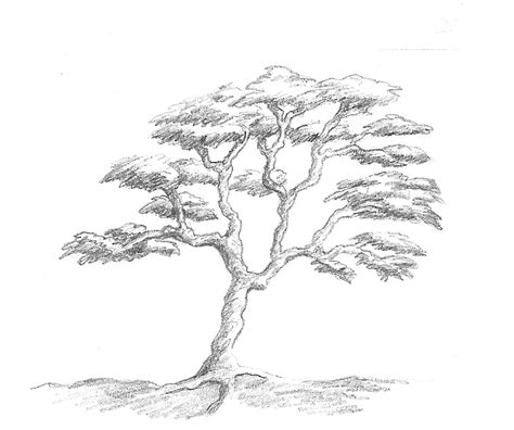 simple tree drawing by marcy