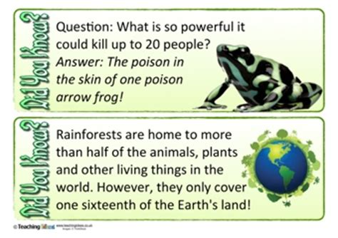 rainforest did you know? cards | teaching ideas