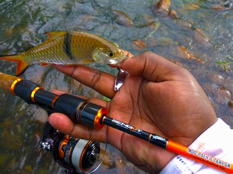 Pancing Flying Lure the pros and cons of spinning reels for ultralight fishing