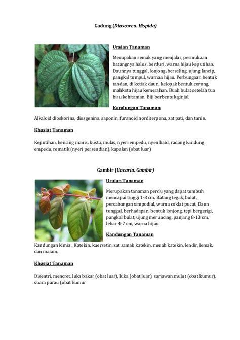 Tanaman Obat Untuk Batuk Kronis tanaman obat