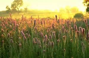 plants in the tropical grassland grasslands plants