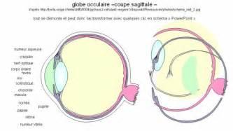 svt exercice legender un schema de l oeil humain