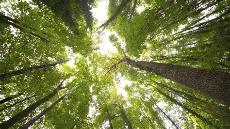 What Is A Tree Canopy Vancouver Aims To Improve Tree Canopy With Cheap Deals