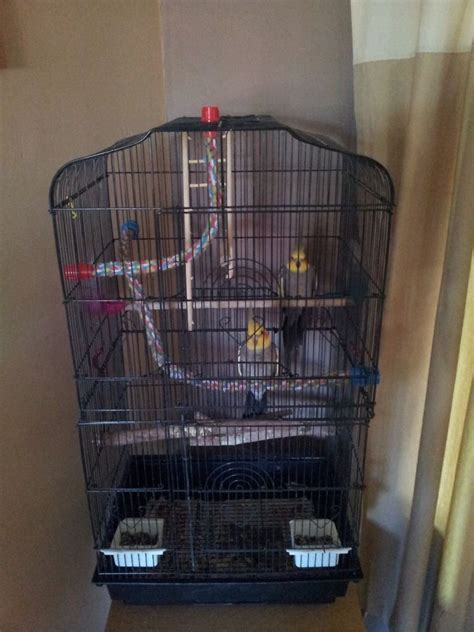 best cage cage for cockatiel bird cages