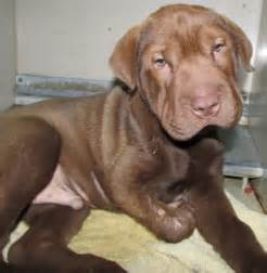 richland county pound logan and hobble we are funding for an arm and a leg and we need your assistance