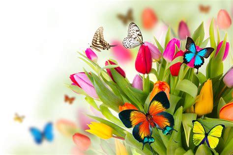 imagenes flores mariposas fotos de flores y mariposas