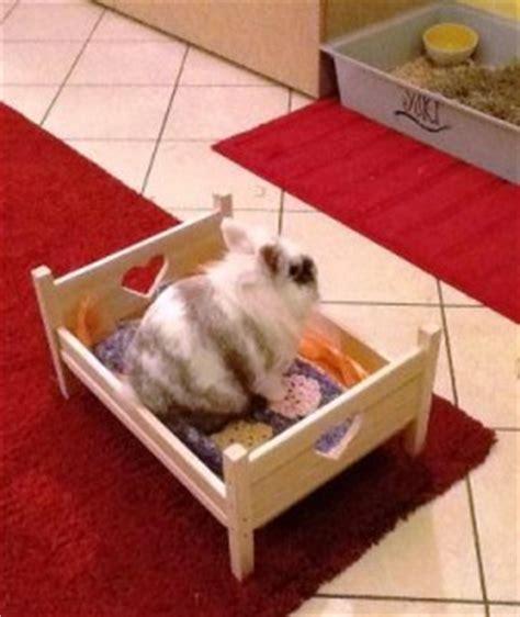 lettiere per conigli nani come attrezzare al meglio lo spazio vostro coniglietto