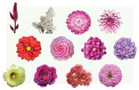 hottest meaning the meaning of flowers by urban botanicals