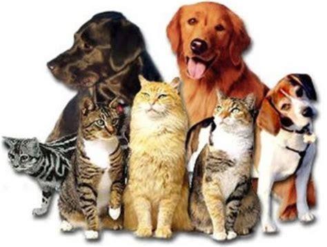 Cutest Cats Pet Pet Pet Product by Quantos Animais De Estima 231 227 O Voc 234 Tem