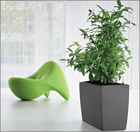 Large Low Light Indoor Plants | large indoor plants low light office furniture