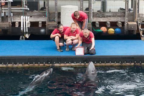 vancouver aquarium 50 new year chester meets helen in new habitat at the aquarium aquablog