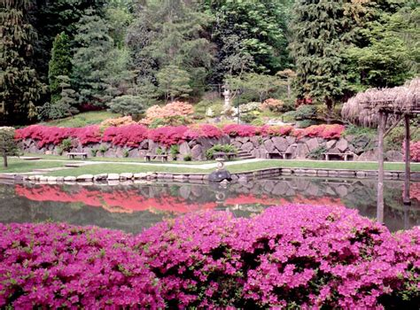pics of gardens gold stuff beautiful japanese gardens