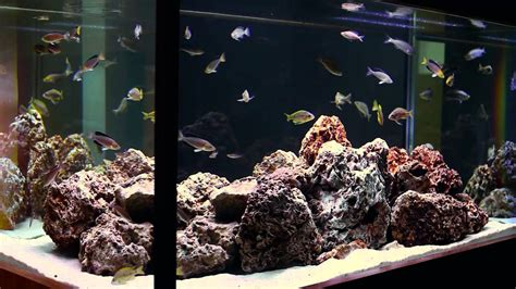 aquarium design youtube simple beauty of tanganyikan fish a hardscape by